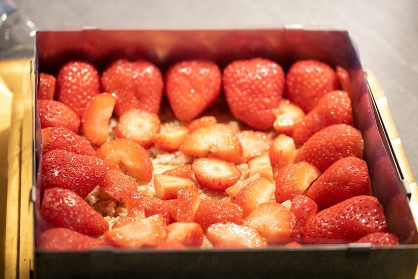 fraises fraisier benghanem
